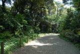 自然教育園 春 001.jpg