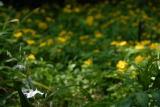 自然教育園 春 011.jpg