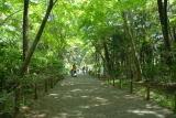 自然教育園 春 021.jpg