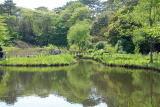 自然教育園 春 029.jpg